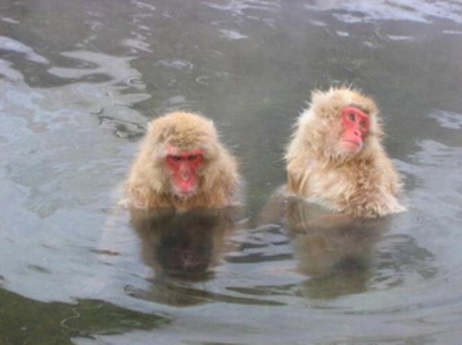 地獄谷 野猿公苑(車1時間) スノーモンキーと海外で紹介され外人さんの観光客も多いです