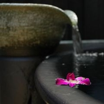 お花を浮かべてみました。イメージです。