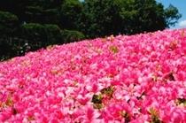 高野山公園【周辺施設】