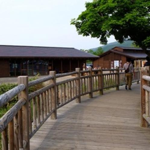 高架木道は全長約800m。