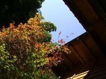 秋晴れの朝。気持ちいい眺めの朝風呂。