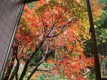 お風呂から眺める!紅葉です。