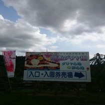 ☆川西ダイヤ園 10万本のダリヤの花が咲き競う☆