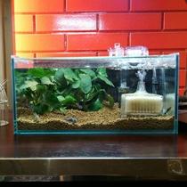 フロントの熱帯魚水槽