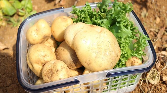 野菜収穫体験&野菜1カゴ分のお土産付<バイキング>ご宿泊プラン!