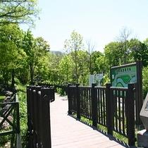 【朝里川遊歩道】自然と触れ合う♪お散歩には、最適の遊歩道があります