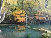 秋・鳥沼公園