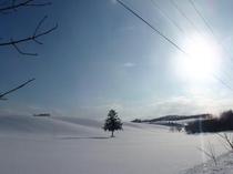 冬・春よ来いの木