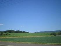 夏・牧草畑