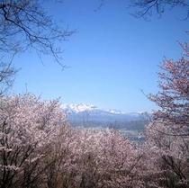 春・桜と十勝岳