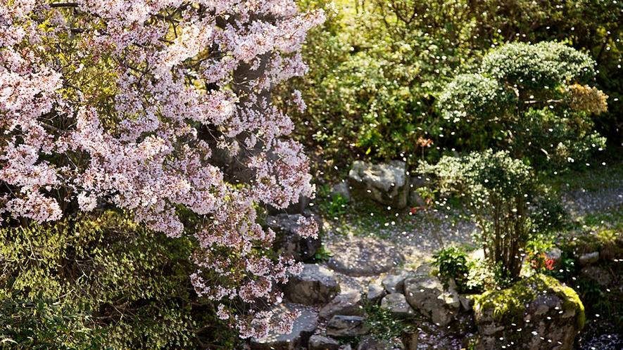 """【日本庭園】桜の花言葉は""""精神の美""""強く美しい桜に心を癒される"""
