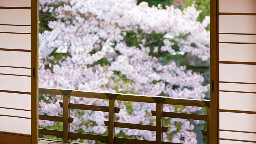 【日本庭園】春を彩る「満開の桜」をお部屋からお楽しみいただけます