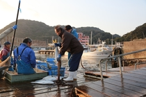 漁港から朝締めの魚を持ち帰る大将