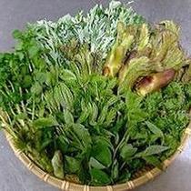 【春旬】タラの芽 こんてつ あずきな フキノトウ 山菜は春の御馳走