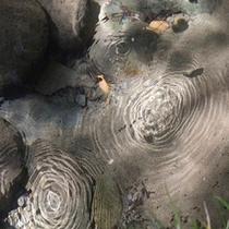 川沿いをお散歩していると 水面にぷくぷく~と炭酸泉の泡が上がってきます。