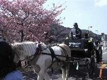 みなみの桜と菜の花祭りを行く馬車