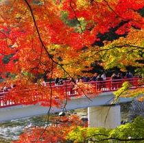 『香嵐渓』の紅葉