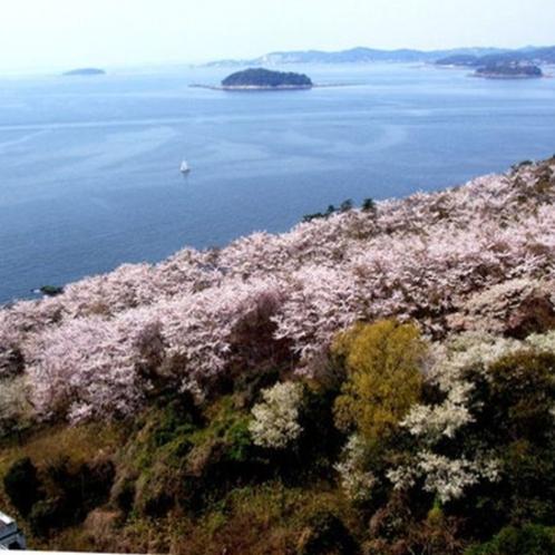 当館スカイラウンジからの桜の眺め。