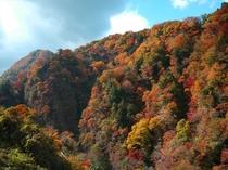 九酔渓の景色新緑