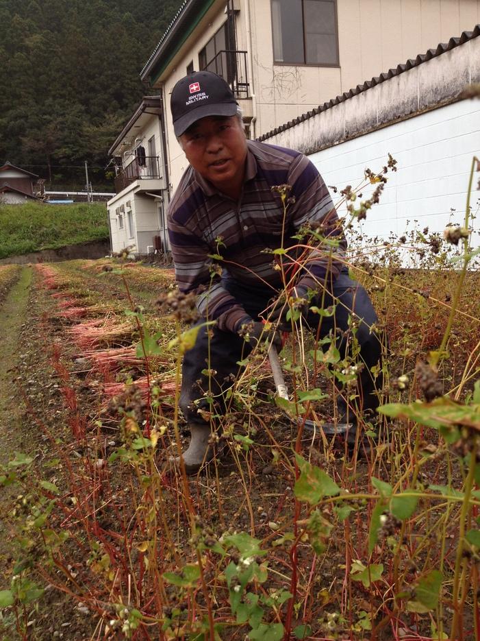 蕎麦栽培 6 刈り取り