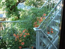初夏の中庭