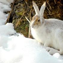 【冬の眺め】露天風呂やお部屋の前には、ウサギがひょっこり顔を見せることも。