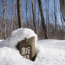 【雪景色】美人林の看板が隠れるほどの豪雪は、まるで別世界!