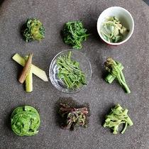 【こだわりの山菜】山菜プランの前菜9種盛り。春のわずかな時期のみ収穫できる貴重な山菜はここでしか味わ