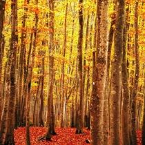 秋の美人林 赤や黄色に色づく時間は1年の中でもほんの一瞬です。