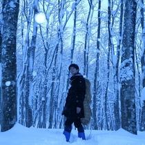 【スノーシュー体験】美人林でスノーシュー♪