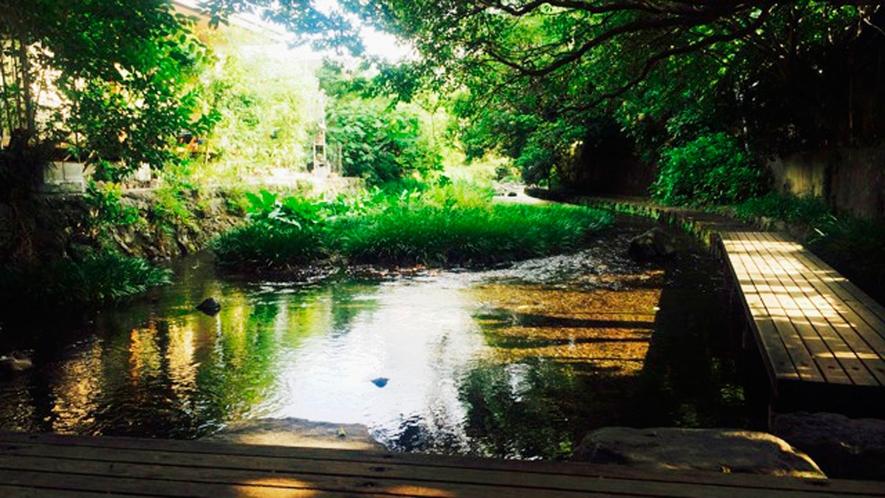 *【源兵衛川(源平川)】<当館より徒歩1分>「水の都:三島」の代表的な川。緑豊かな清流です。
