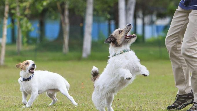 【愛犬と温泉旅行♪】夕食は和食会席竹コースと25品バイキング