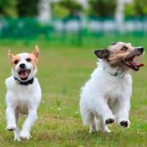 ドッグランでは楽しそうに走り回る愛犬のかわいい姿を見ることが出来ます。