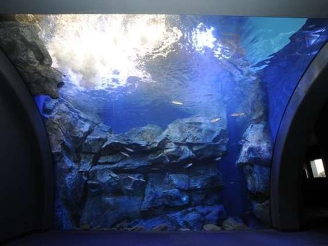 2012年7月にオープンした「山の水族館」。温根湯の新観光名所として多くの人が訪れています