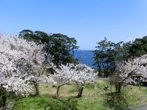 レストランから観える春の景色