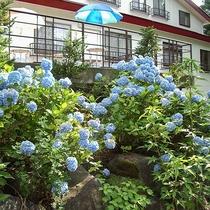 *[お庭]あじさいやツツジなど、季節ごとのお花を楽しめるお庭。