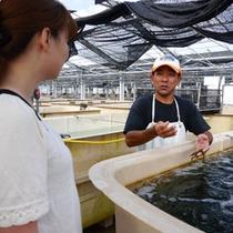 【海ぶどうの養殖場】養殖場内は、事前予約で見学も可(当館から車で15分)