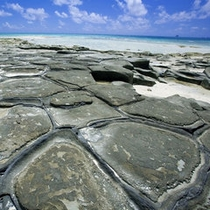【畳石】亀の甲羅のように並んでいる岩。海の眺めも最高♪(当館から車で5分)