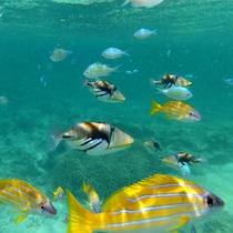 *【はての浜】人懐こい魚たちと一緒に海をお散歩♪