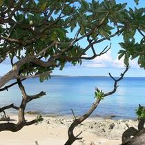 *【ビーチ】島尻集落近隣のビーチ♪