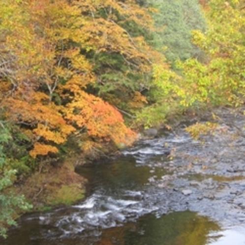 志賀高原の紅葉は緑とオレンジのコントラストが魅力!