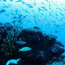 奄美の海には魚がいっぱい♪