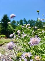 お庭風景(夏)
