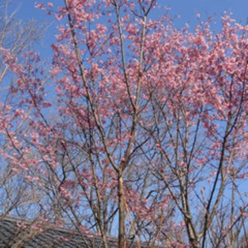 ■桜咲く宿