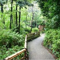 ■森の小径