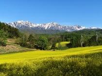 春の中山高原
