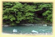 客室から四万川を眺めた景色です