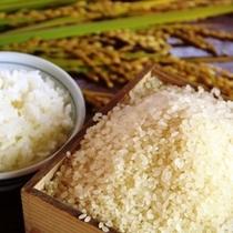 食材-稲刈り_米とごはん