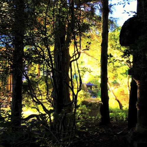 庭園ライトアップ 〈晩夏〉