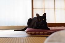 猫スタッフ コウ